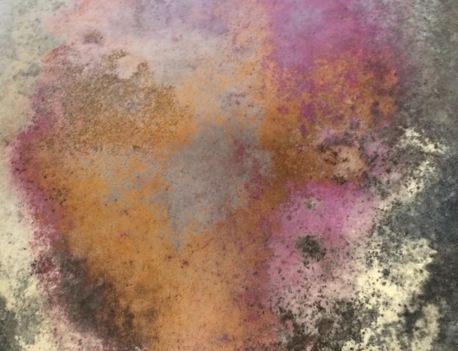mold jacksonville FL MartinEnviro